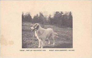 Maine West Gouldsboro Bob Pet of Wayside Inn Albertype