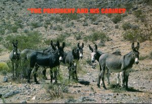 Humour Group Of Donkeys The President and His Cabinet 2001
