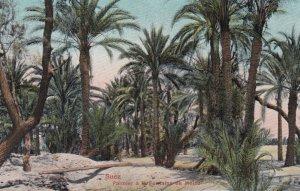 SUEZ , Egypt , 00-10s ; Palmier a la Fontaine de Moise