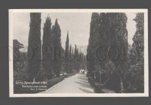 079965 CAUCASUS Hosta Primorskiy park Cypress avenue Vintage