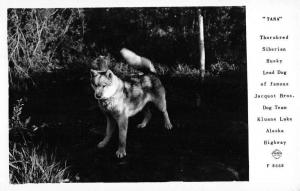 Kluane Lake Alaska Husky Sled Dog Frasher Real Photo Antique Postcard K43598