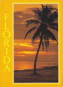 Florida Beautiful Sunrise Along The Coast