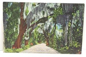Hanging Moss X32 Vintage Postcard