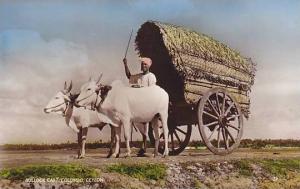 RP, Bullock Cart, Colombo, Ceylon (Sri Lanka), Asia, 1920-1940s