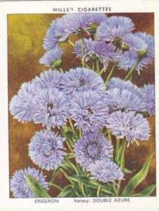 Wills Vintage Cigarette Card Garden Flowers 1939 2nd Series No 11 Erigeron Do...