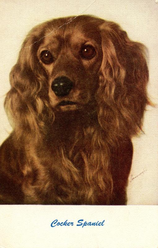 Dog - Cocker Spaniel       (damaged)