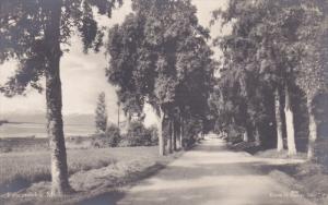 RP; FANESTRANDEN, Molde, Norway; Tree-lined Road, 00-10s