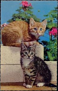 Two Sweet Young CATS Kitten Waiting (1965)