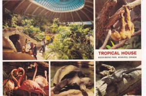 5-Views, Tropical House, Assiniboine Park, Winnipeg, Manitoba, Canada, 50-70s