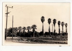 1920-30s CHAS. VOLZ ORCHARD Real Photo RPPC PANAMA Postcard Trees