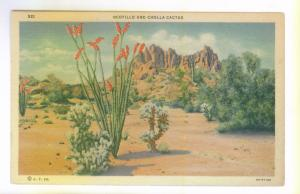 Ocotillo and Cholla Cactus, unused Art Colortone linen Postcard