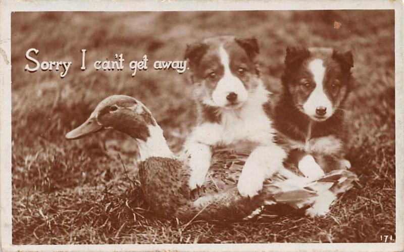 Sorry, I can't get away, Dogs, puppies, Duck