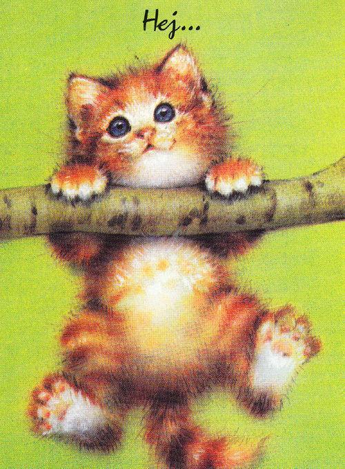 hey swedish sweden cat stuck in on tree branch stick hanging