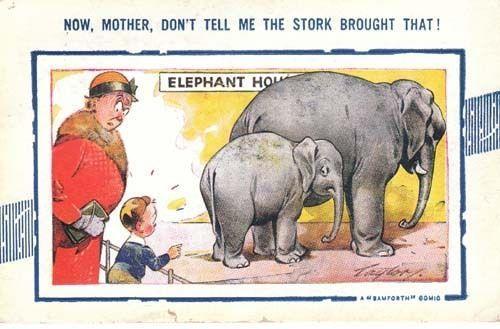 Elephant Zoo Animal Seaside Humour 1940s Postcard