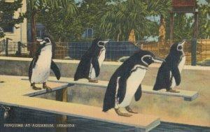 BERMUDA , 1930-40s ; Penguins at Aquarium