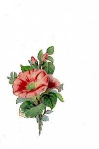 Victorian Paper Scrap, Flower, 1 1/2 X 3 inches