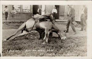 Hazelton BC Fallen Horse No Harm Done c1912 W.W. Wrathall RPPC Postcard E67