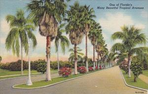 One Of Florida's Many Beautiful Tropical Avenues Florida