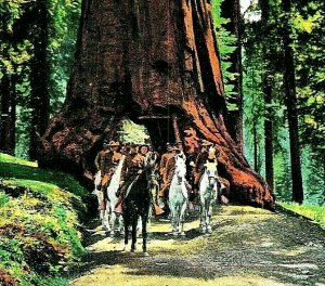 Vtg Cartolina 1910 STATI UNITI Truppe Presso Wawona Mariposa Big Tree Grove Ca