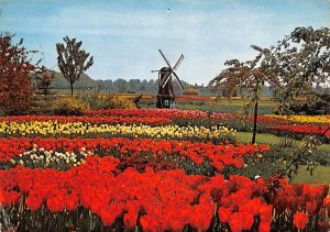 Flowers Holland 1972
