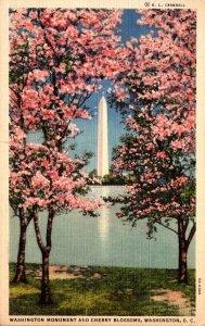 Washington D C The Washington Monument and Cherry Blossoms 1937 Curteich