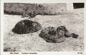 1933 Sao Paolo Brasil Instituto Butantan RPPC Tarjeta Postal Rattlesnakes