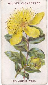Cigarette Card Wills Old English Garden Flowers 2nd Series No 9