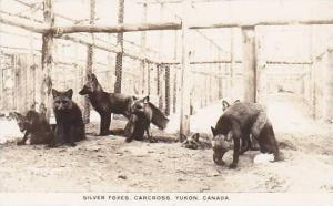 RP: Silver Foxes, Carcross, Yukon, Canada, 00-10s
