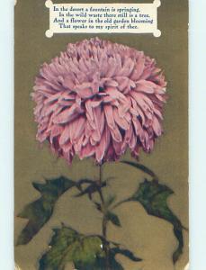 Divided-Back BEAUTIFUL LARGE PURPLE FLOWER o8948