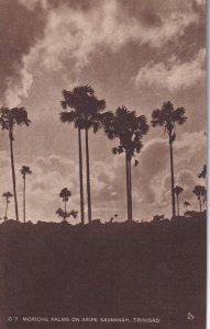 TRINIDAD, 1900-1910s; Moriche Palms On Aripe Savannah
