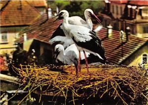 BF40008  nid de  cigogne en alsace stork france  bird oiseau