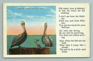 Pelican Chick Baby Bird St Petersburg FL Postcard