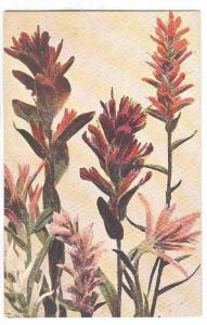 TUCK : Rocky Mountain Flowers , 00-10s : Indian Paint Brush