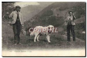 Old Postcard Dogs Pyrenees Dog