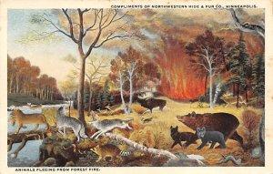 Advertising Post Card Northwestern Hide & Fur Co, bears Minneapolis, MN, USA ...
