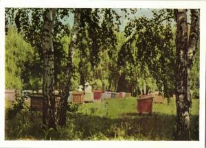 kazakhstan russia, Apiary Beekeepers Beekeeping Beehive Bee (1960s)
