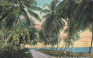 Cocoanut Grove on the road to Morant Bay,  Jamica,  00-10s