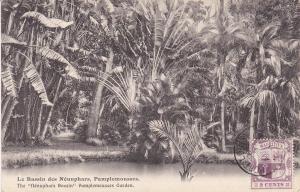 The Nenuphars Bassin Pamplemousses Garden, PAMPLEMOUSSES, Mauritius, 1900-10s