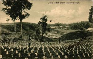 CPA INDONESIA Jonge Tabak onder schaduw-plankjes (340938)