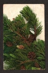 NY Greetings From WALTON NEW YORK Pine Cones Postcard