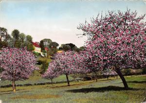 France La Normandie Pittoresque Tree Flowers