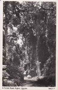 RP: Forest Road , Kigezi , Uganda , 30-50s