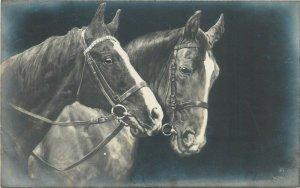 Horses photo postcard