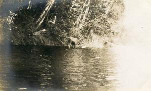 ME - Moose in Moosehead Lake **RPPC**