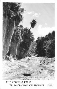 RPPC The Leaning Palm Tree, Palm Canyon, California ca 1940s Vintage Postcard