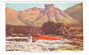 South Africa 40-50s ; Springtime in Kirstenboch , Cape Town