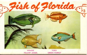 Folder - Fish of Florida     14 views + narrative