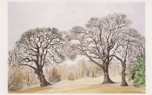 Hampstead Heath London Kenwood 1984 Painting Postcard