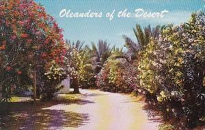 Arizona Phoenix Oleanders Of The Desert 1964