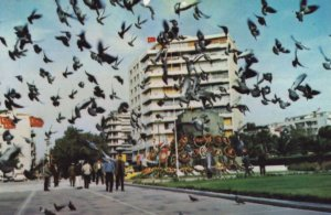 Turkey Birds Going Crazy in Republic Square At Victoria Statue Postcard